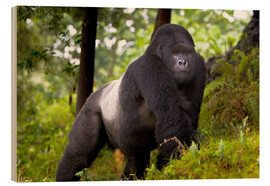 Obraz na drewnie  Mountain gorilla on a foray - Ralph H. Bendjebar