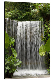 Obraz na aluminium  Waterfall in the orchid garden - Cindy Miller Hopkins
