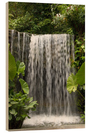 Obraz na drewnie  Waterfall in the orchid garden - Cindy Miller Hopkins