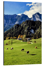 Obraz na aluminium  Alpine views with forest and pasture - Ric Ergenbright