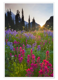 Plakat  Flower meadow at sunrise - Gary Luhm