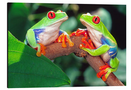 Obraz na aluminium  Two red-eyed tree frogs - David Northcott
