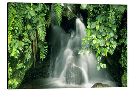 Obraz na aluminium  Small waterfall in the rainforest - Kevin Schafer