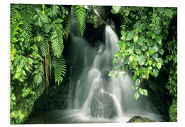 Obraz na PCV  Small waterfall in the rainforest - Kevin Schafer