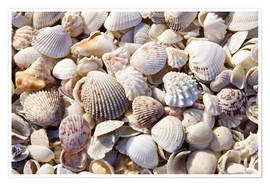 Plakat  Shell collection - Rob Tilley