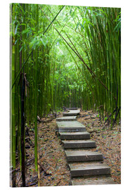 Obraz na szkle akrylowym  Wooden path in the bamboo forest - Jim Goldstein