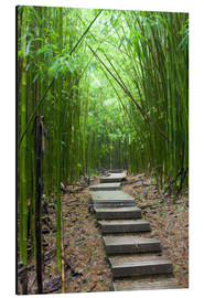 Obraz na aluminium  Wooden path in the bamboo forest - Jim Goldstein