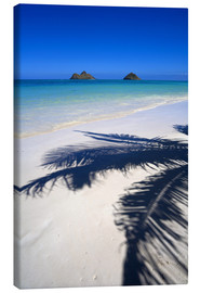 Obraz na płótnie  Palm shadow on Lanikai Beach - Douglas Peebles