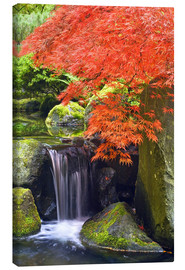 Obraz na płótnie  Waterfall and Japanese Maple - Don Paulson