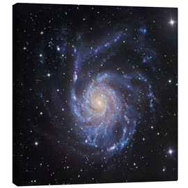 Obraz na płótnie  M101, The Pinwheel Galaxy in Ursa Major - Robert Gendler