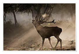 Plakat Deer in the forest