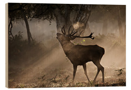 Obraz na drewnie  Deer in the forest - Alex Saberi