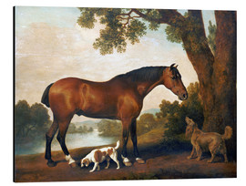 Obraz na aluminium  Horse and two dogs - George Stubbs