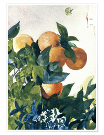 Plakat  Oranges on a Branch - Winslow Homer