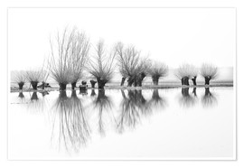 Plakat Willow trees in the mirror image of the flood