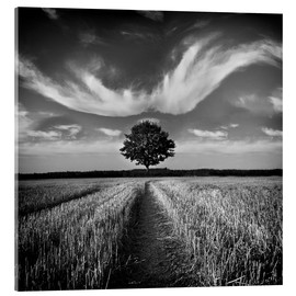 Obraz na szkle akrylowym  Tree and clouds - Carsten Meyerdierks