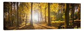 Obraz na płótnie  Autumn forest backlit with sunshine and yellow autumn leaves - Jan Christopher Becke