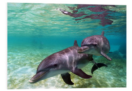 Obraz na PCV  Two bottlenose dolphins from the beaches of the Caribbean - Stuart Westmorland