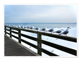 Plakat Seagull line-up, Baltic Sea