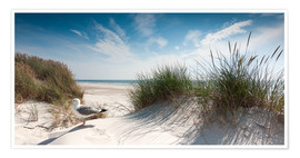 Plakat Dune with fine beach grass and seagull, Sylt