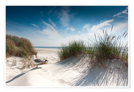 Plakat Sylt - dune with fine beach grass and seagull