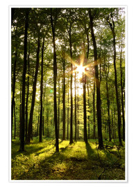 Plakat Forest in Sunset