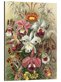 Obraz na aluminium  Orchids, artistic forms of nature, graphic 74 - Ernst Haeckel