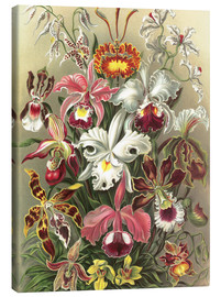 Obraz na płótnie  Orchids, artistic forms of nature, graphic 74 - Ernst Haeckel