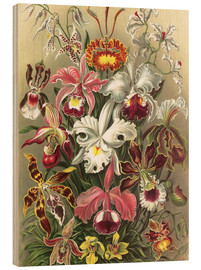 Obraz na drewnie  Orchids, artistic forms of nature, graphic 74 - Ernst Haeckel