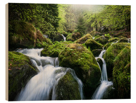 Obraz na drewnie  Wild Creek in German Black Forest - Andreas Wonisch