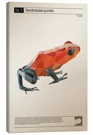 Obraz na płótnie  fig5 Polygonfrosch Poster - Labelizer