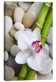 Obraz na płótnie  Bamboo and orchid - Andrea Haase Foto
