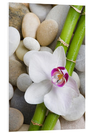 Obraz na PCV  Bamboo and orchid - Andrea Haase Foto