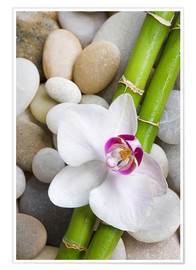 Plakat  Bamboo and orchid - Andrea Haase Foto