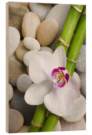 Obraz na drewnie  Bamboo and orchid - Andrea Haase Foto