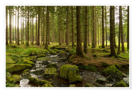 Plakat forest with creek