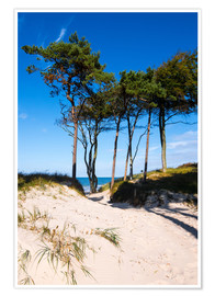 Plakat Baltic sea - Wstern beach close to Ahrenshoop
