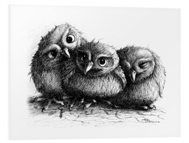 Obraz na PCV  Three young owls - owlets - Stefan Kahlhammer