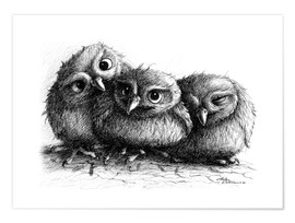 Plakat Three young owls - owlets