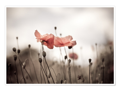Plakat Poppies 03