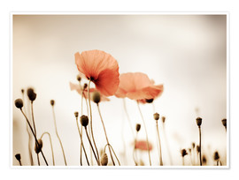 Plakat Red Poppy Dream