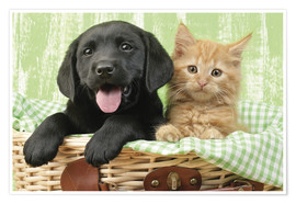 Plakat Puppy and kitten in green gingham