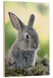Obraz na drewnie  Grey rabbit - Greg Cuddiford