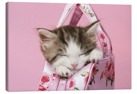 Obraz na płótnie  Sleeping kitten in pink handbag - Greg Cuddiford