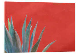 Obraz na szkle akrylowym  Agave in front of red wall - Don Paulson