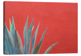 Obraz na płótnie  Agave in front of red wall - Don Paulson