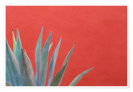 Plakat  Agave in front of red wall - Don Paulson