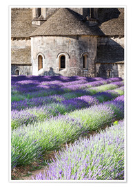 Plakat  Senanque abbey and lavender, Provence - Matteo Colombo
