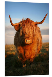 Obraz na PCV  Highland Cattle - Martina Cross