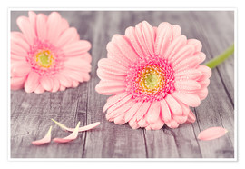 Plakat  Gerbera flower bloom - pixelliebe